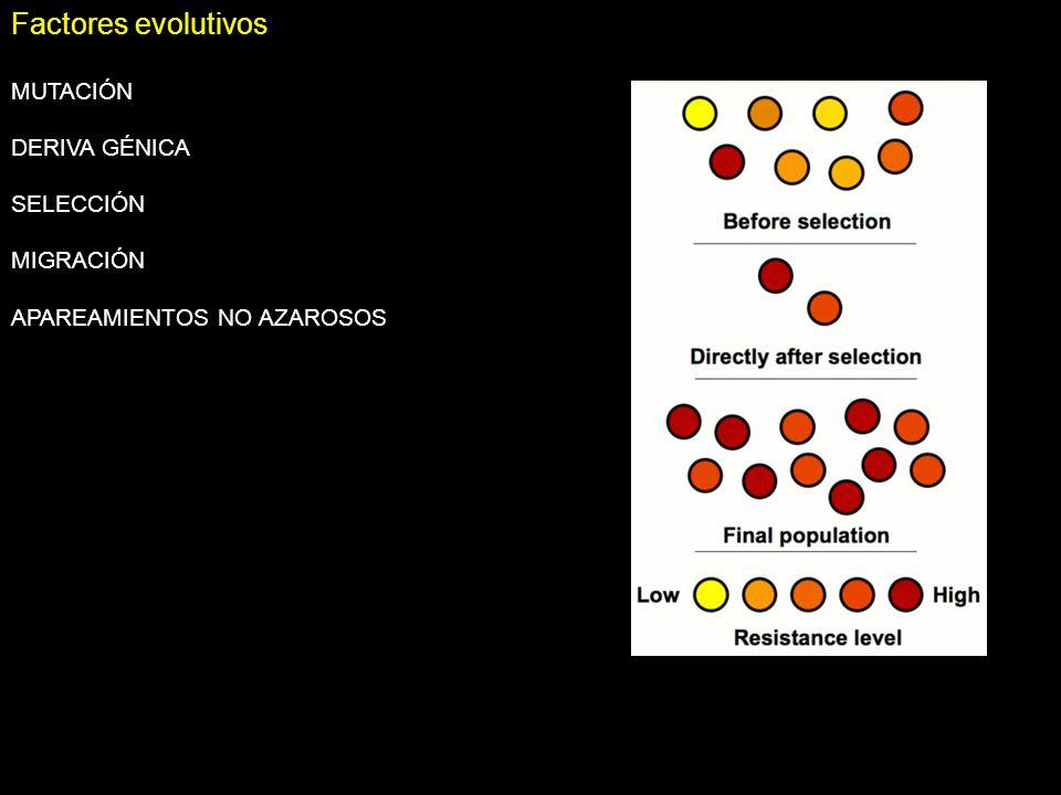 Factores evolutivos MUTACIÓN DERIVA GÉNICA SELECCIÓN MIGRACIÓN