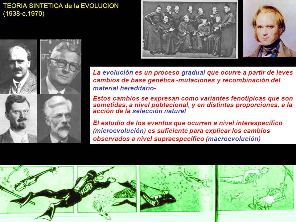 TEORIA SINTETICA de la EVOLUCION (1938-c.1970)