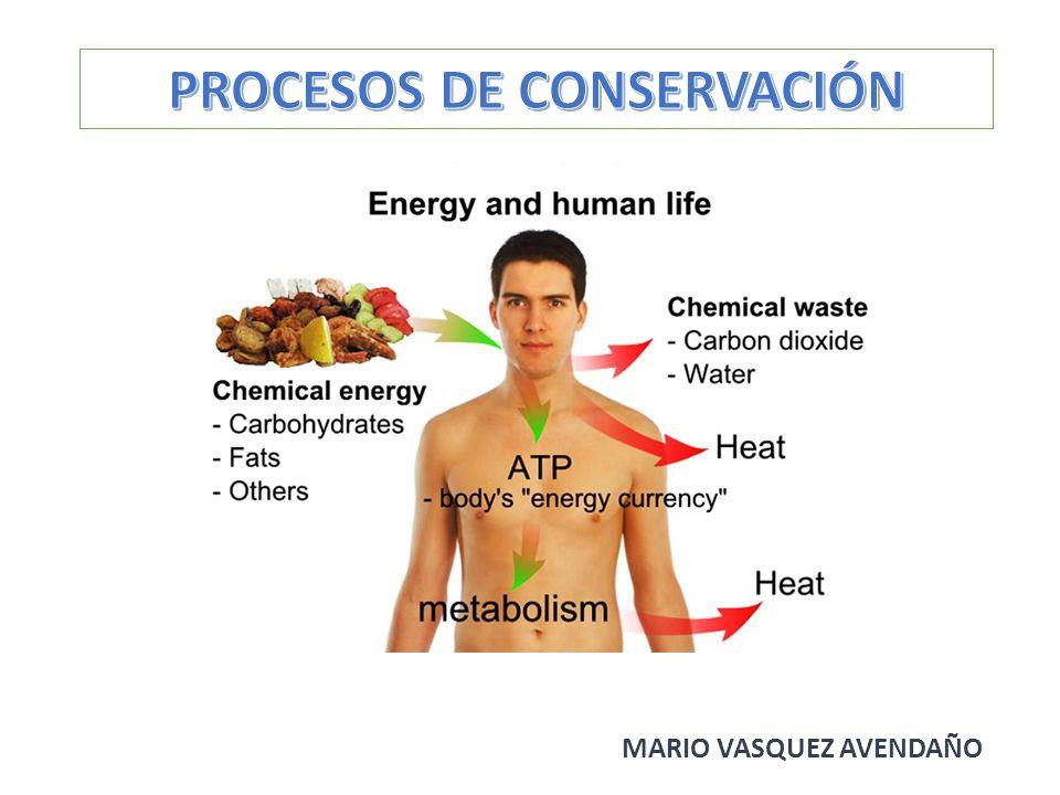 PROCESOS DE CONSERVACIÓN