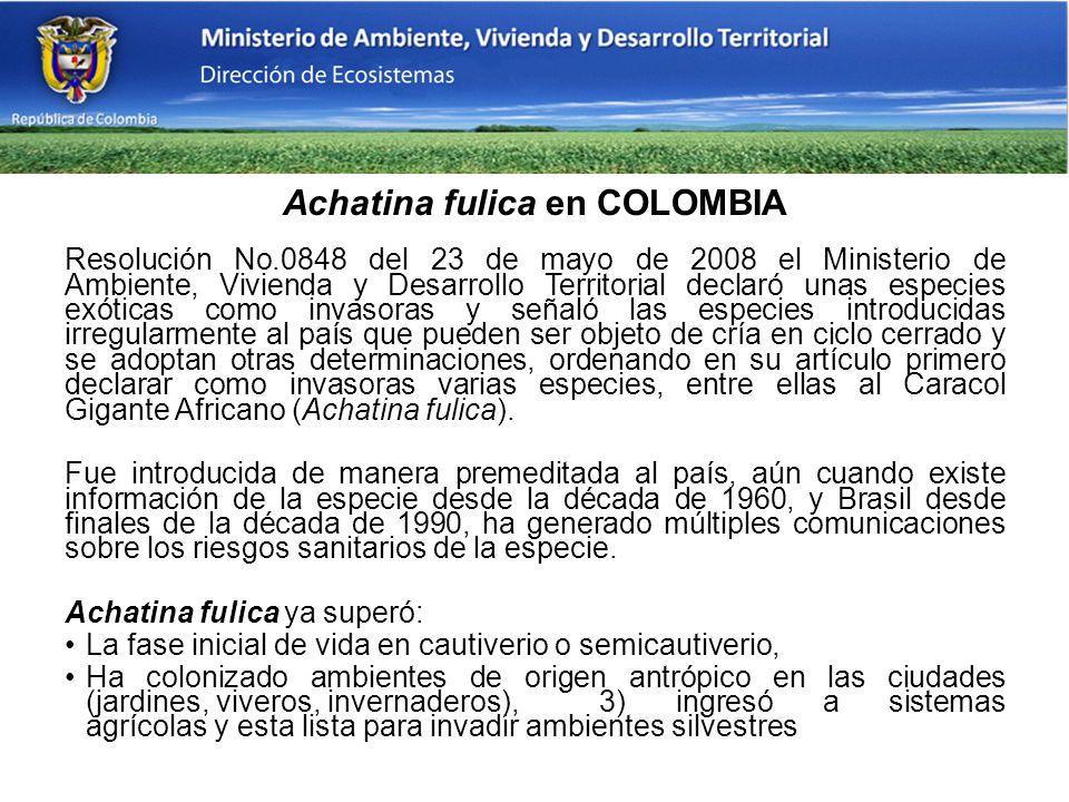 Achatina fulica en COLOMBIA