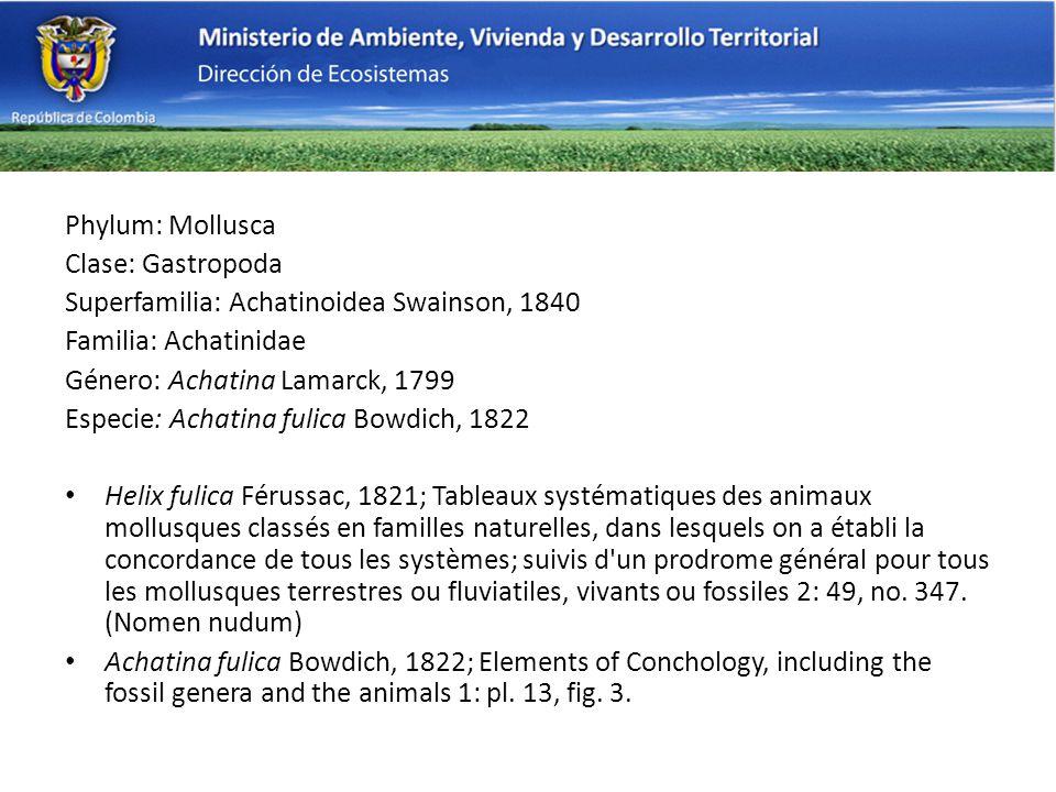 Phylum: Mollusca Clase: Gastropoda. Superfamilia: Achatinoidea Swainson, 1840. Familia: Achatinidae.