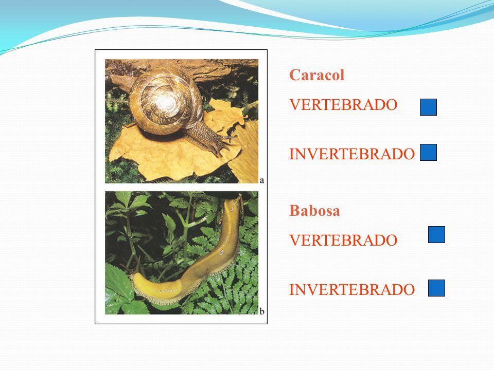 Caracol VERTEBRADO INVERTEBRADO Babosa VERTEBRADO INVERTEBRADO