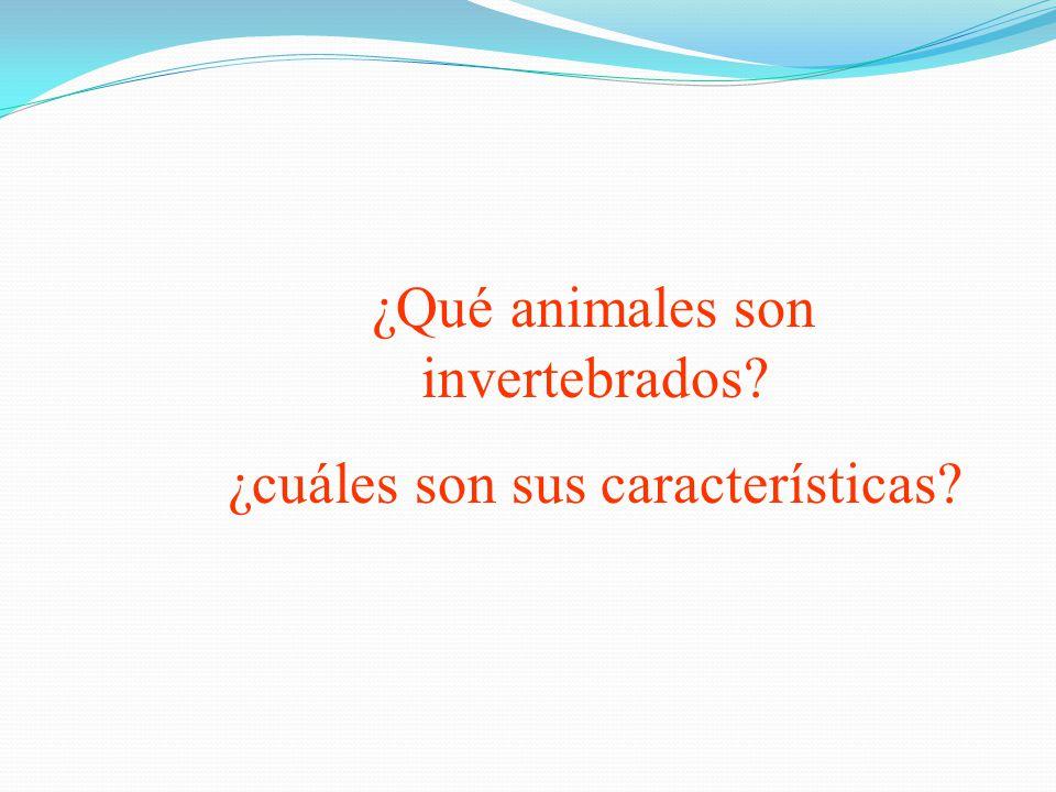 ¿Qué animales son invertebrados ¿cuáles son sus características