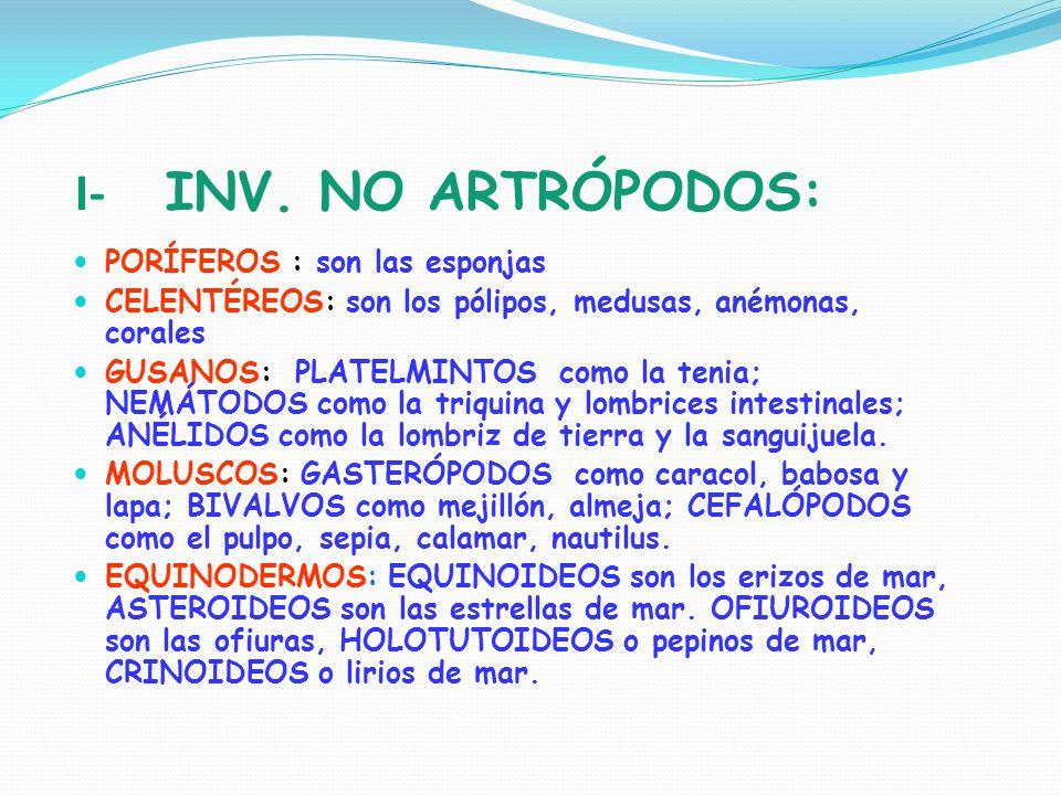 I- INV. NO ARTRÓPODOS: PORÍFEROS : son las esponjas
