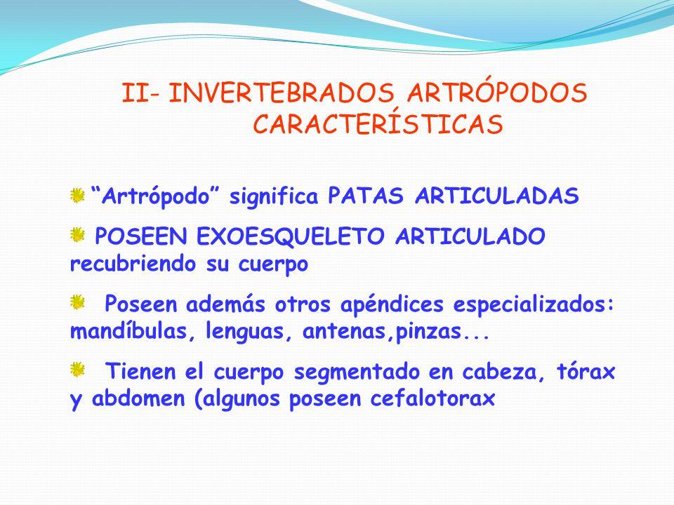 II- INVERTEBRADOS ARTRÓPODOS