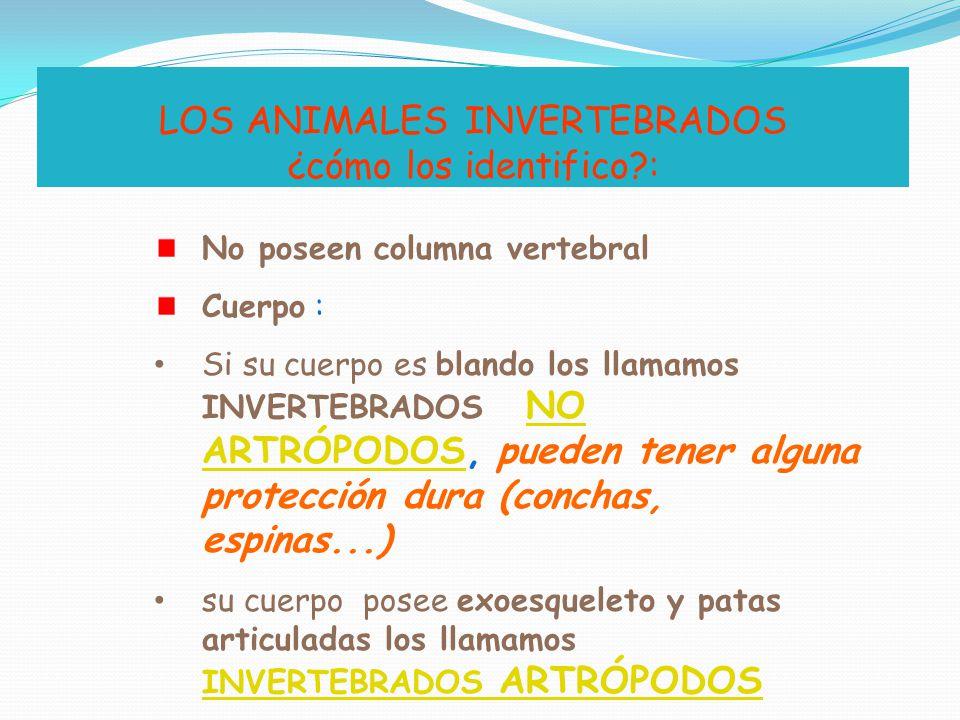 LOS ANIMALES INVERTEBRADOS ¿cómo los identifico :