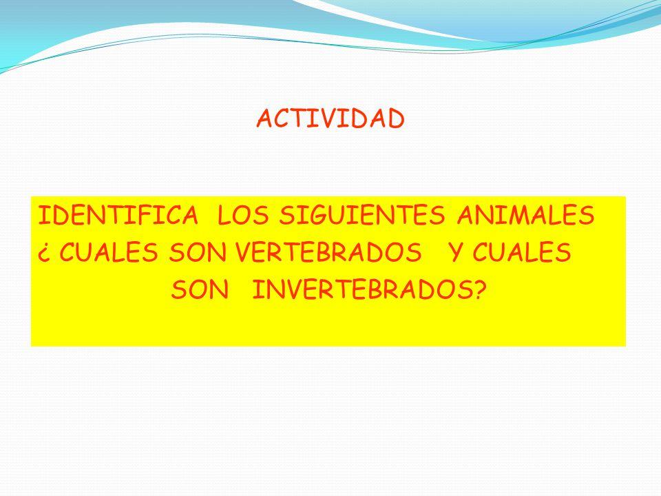 ACTIVIDAD IDENTIFICA LOS SIGUIENTES ANIMALES ¿ CUALES SON VERTEBRADOS Y CUALES SON INVERTEBRADOS