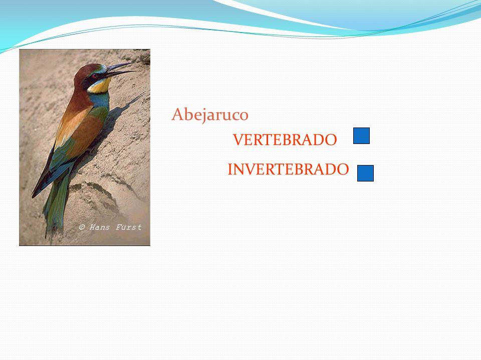 Abejaruco VERTEBRADO INVERTEBRADO
