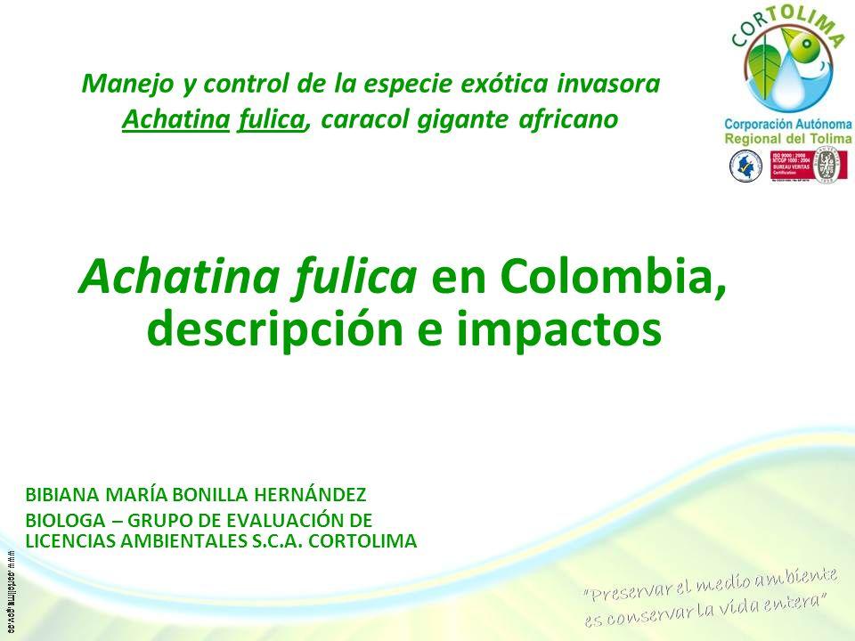 Achatina fulica en Colombia, descripción e impactos