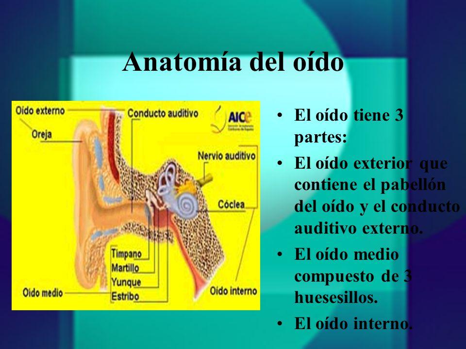 Anatomía del oído El oído tiene 3 partes: