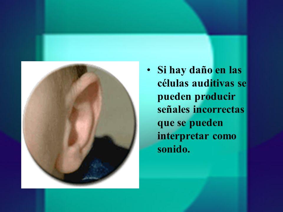 Si hay daño en las células auditivas se pueden producir señales incorrectas que se pueden interpretar como sonido.