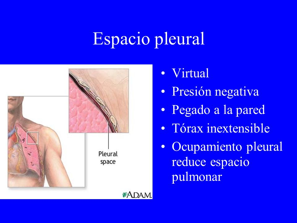 Espacio pleural Virtual Presión negativa Pegado a la pared