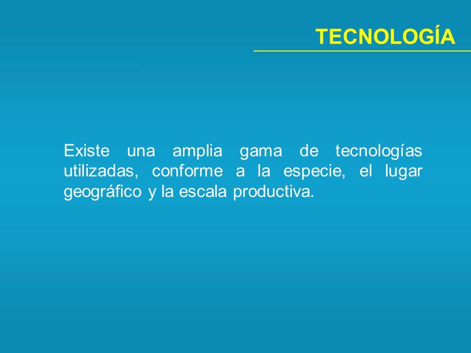 TECNOLOGÍA Existe una amplia gama de tecnologías utilizadas, conforme a la especie, el lugar geográfico y la escala productiva.