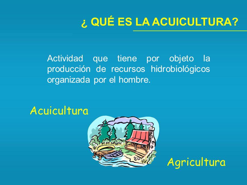 ¿ QUÉ ES LA ACUICULTURA Acuicultura Agricultura