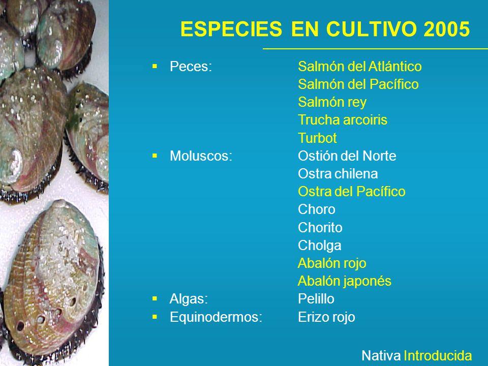 ESPECIES EN CULTIVO 2005 Peces: Salmón del Atlántico