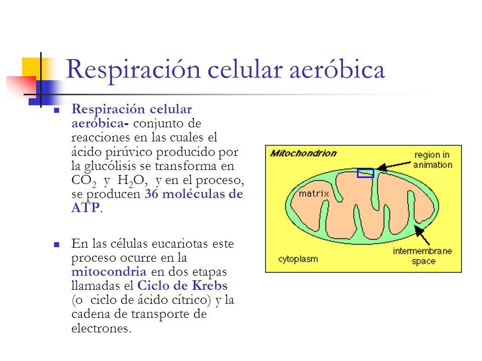 Respiración celular aeróbica