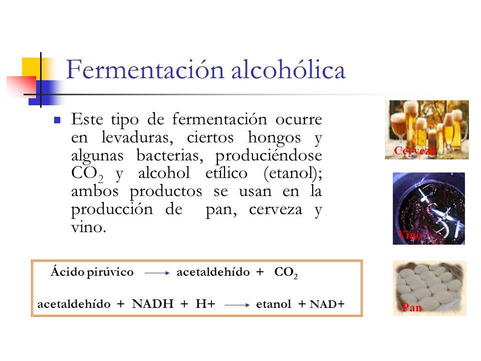 Fermentación alcohólica