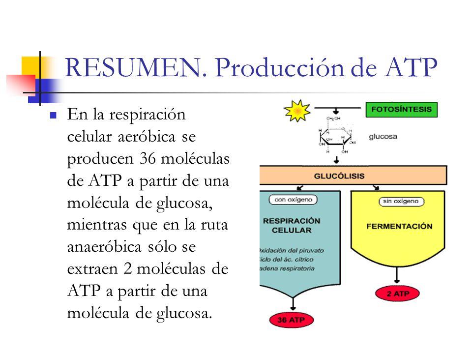RESUMEN. Producción de ATP