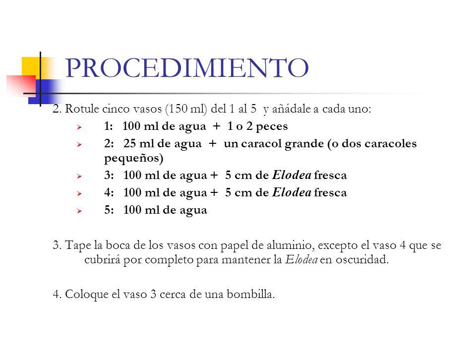 PROCEDIMIENTO 2. Rotule cinco vasos (150 ml) del 1 al 5 y añádale a cada uno: 1: 100 ml de agua + 1 o 2 peces.