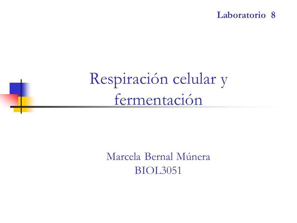 Respiración celular y fermentación Marcela Bernal Múnera BIOL3051