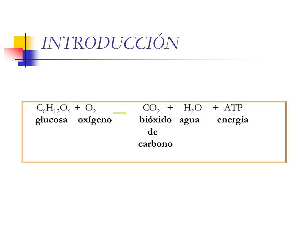 INTRODUCCIÓN C6H12O6 + O2 CO2 + H2O + ATP