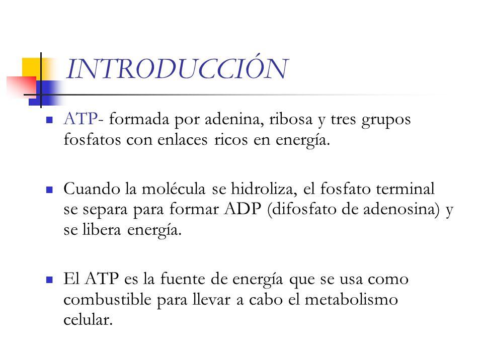 INTRODUCCIÓN ATP- formada por adenina, ribosa y tres grupos fosfatos con enlaces ricos en energía.