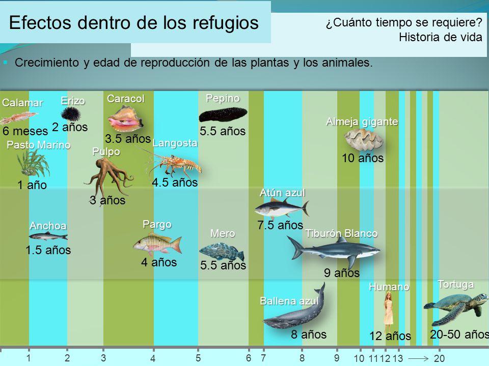 Efectos dentro de los refugios