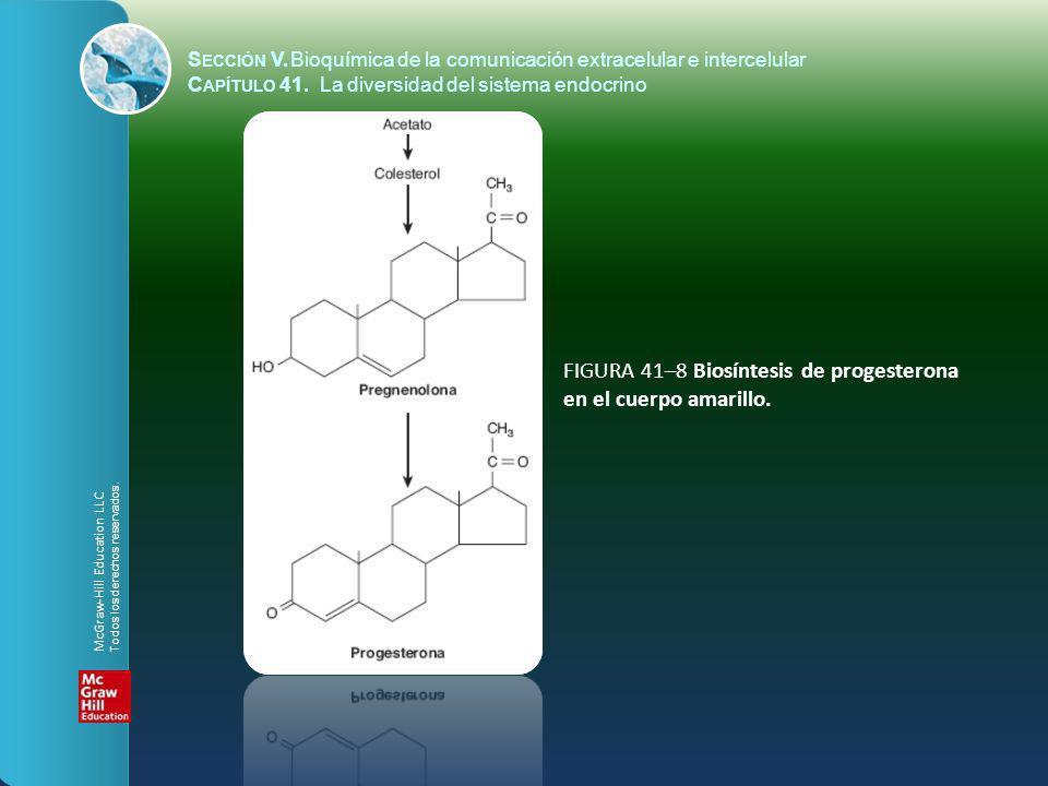 FIGURA 41–8 Biosíntesis de progesterona en el cuerpo amarillo.