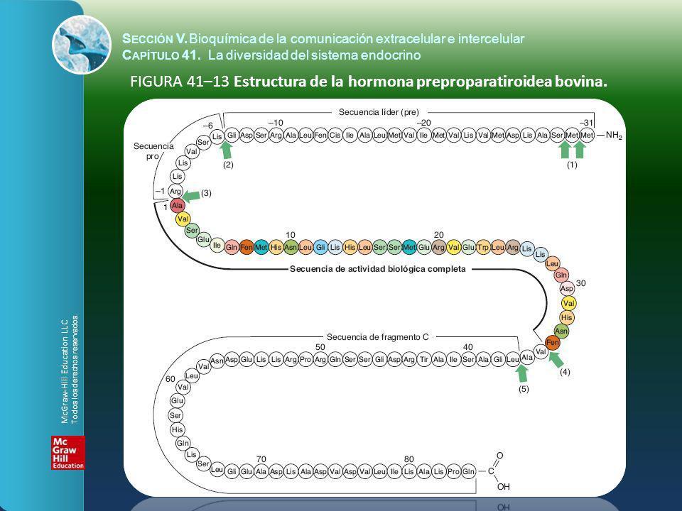 FIGURA 41–13 Estructura de la hormona preproparatiroidea bovina.