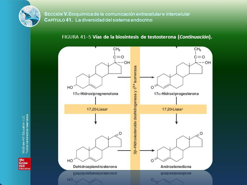 FIGURA 41–5 Vías de la biosíntesis de testosterona (Continuación).