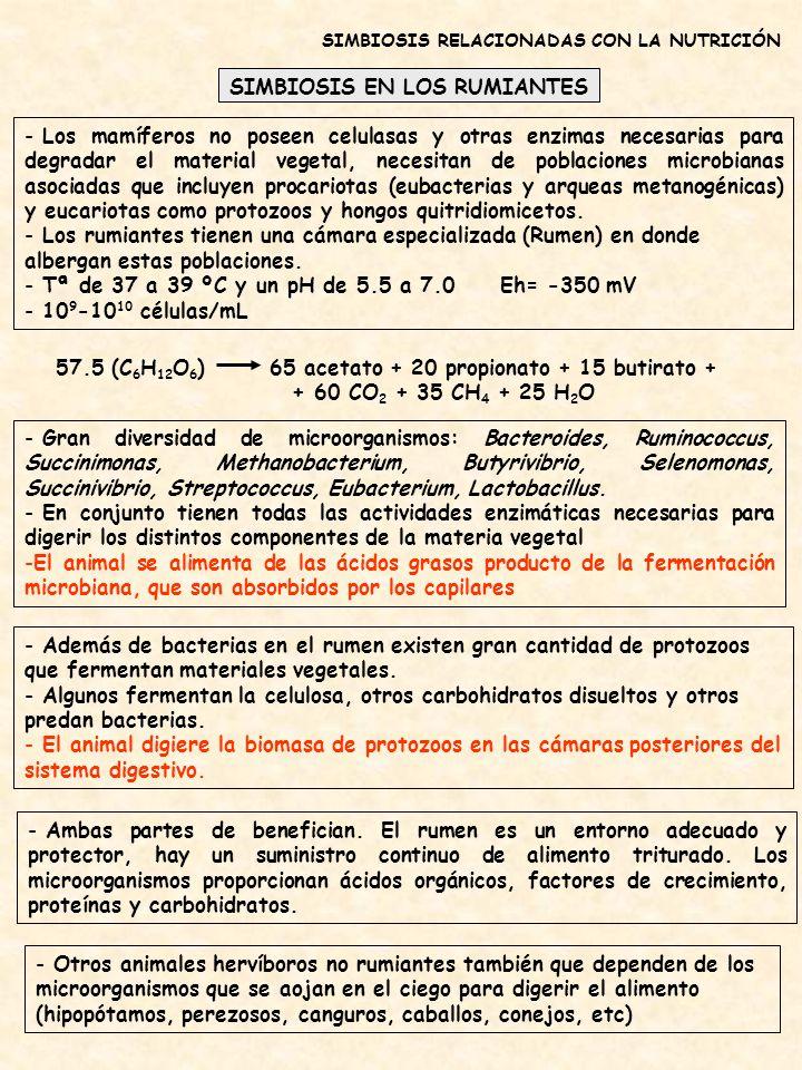 SIMBIOSIS EN LOS RUMIANTES