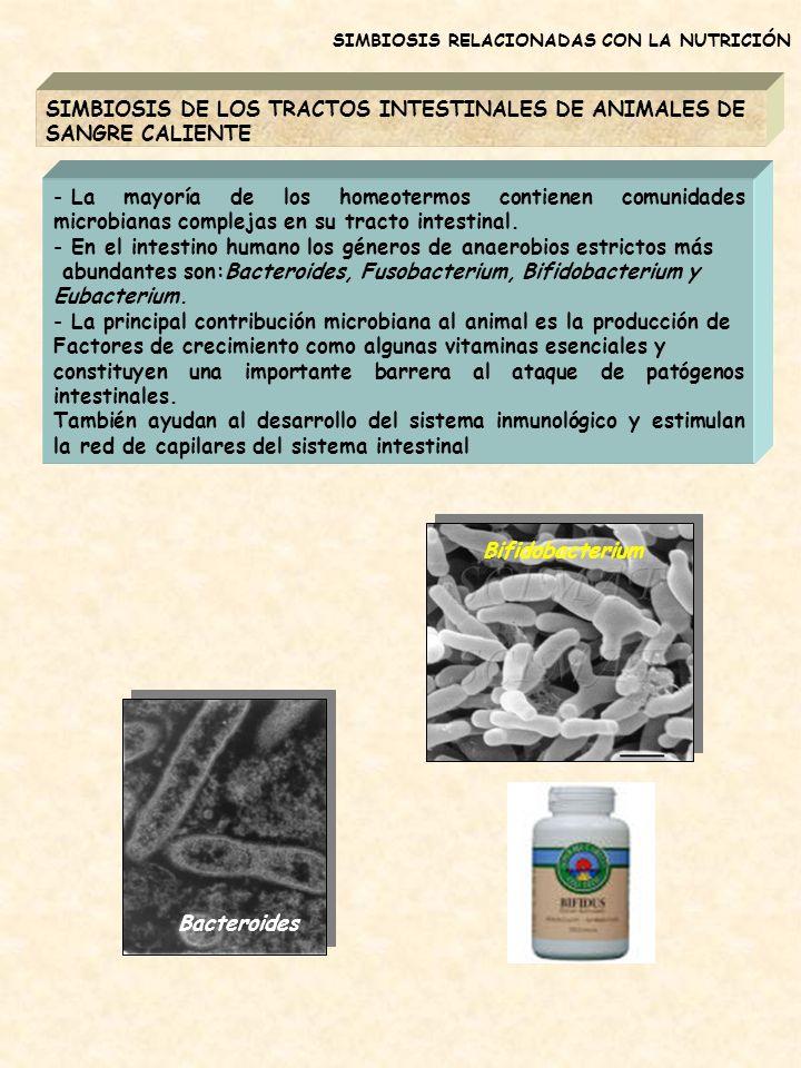 SIMBIOSIS DE LOS TRACTOS INTESTINALES DE ANIMALES DE SANGRE CALIENTE