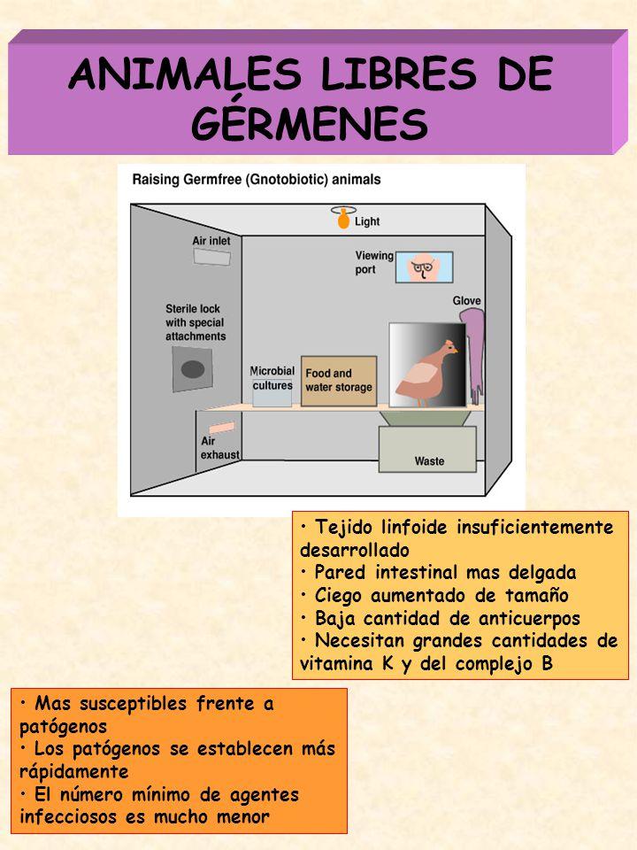 ANIMALES LIBRES DE GÉRMENES