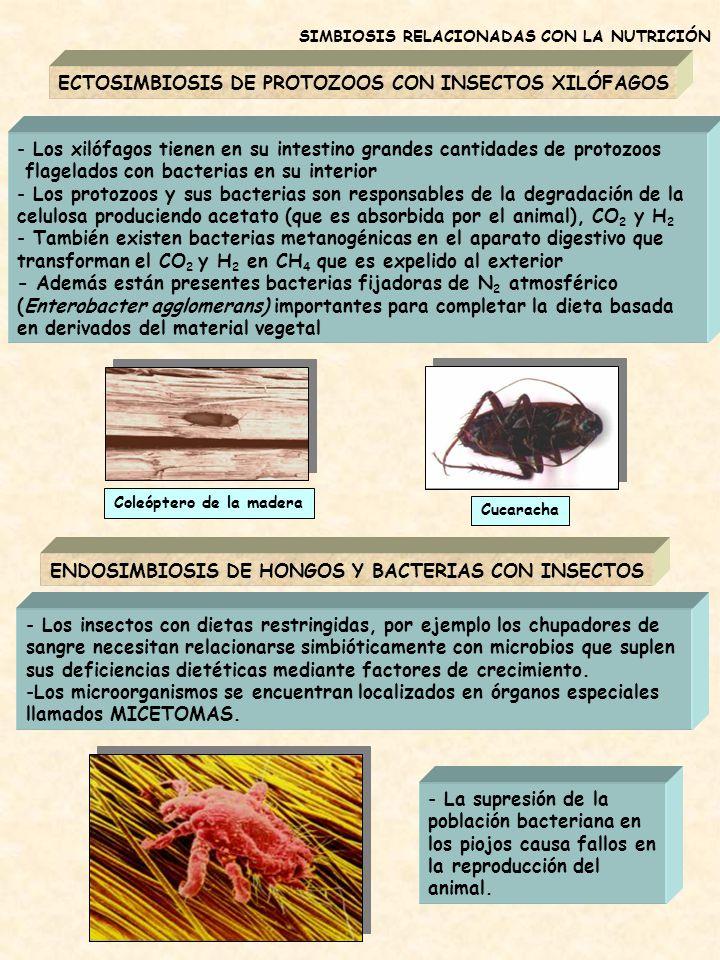 ECTOSIMBIOSIS DE PROTOZOOS CON INSECTOS XILÓFAGOS