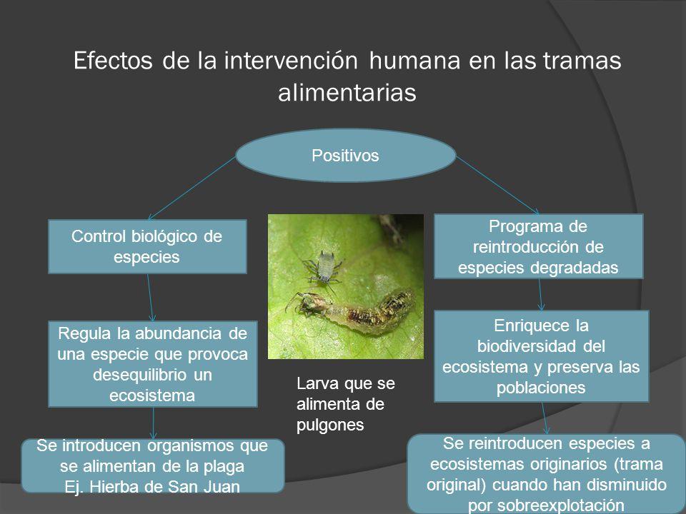 Efectos de la intervención humana en las tramas alimentarias