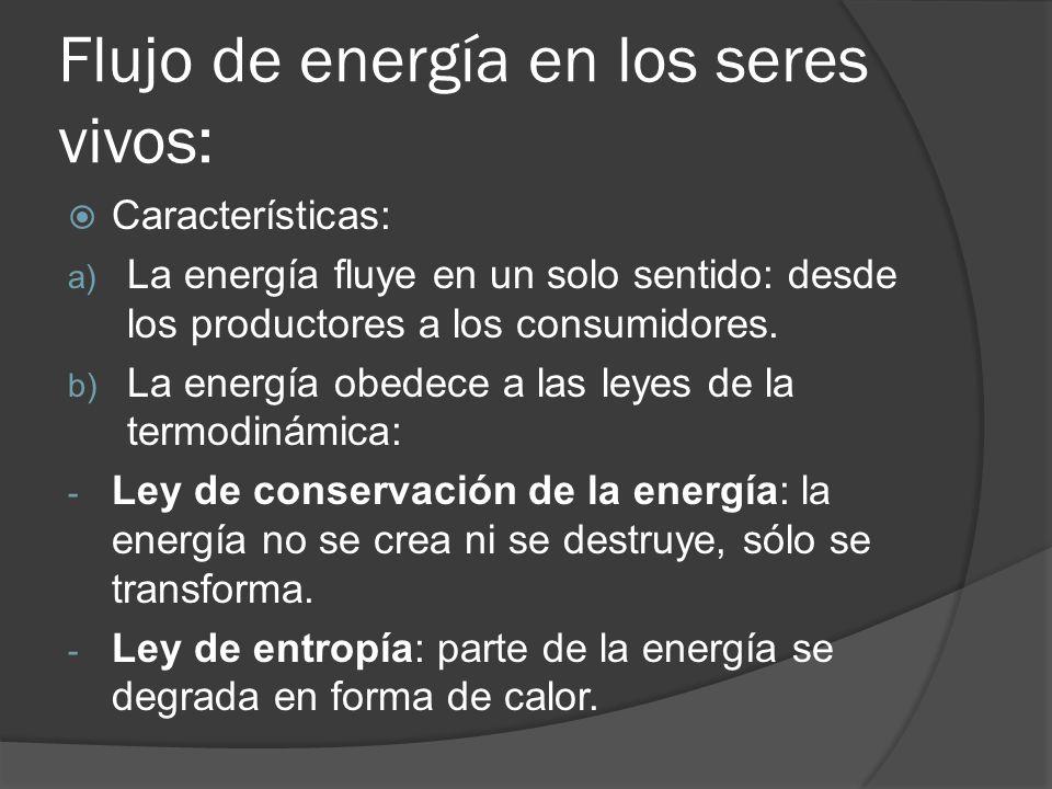 Flujo de energía en los seres vivos: