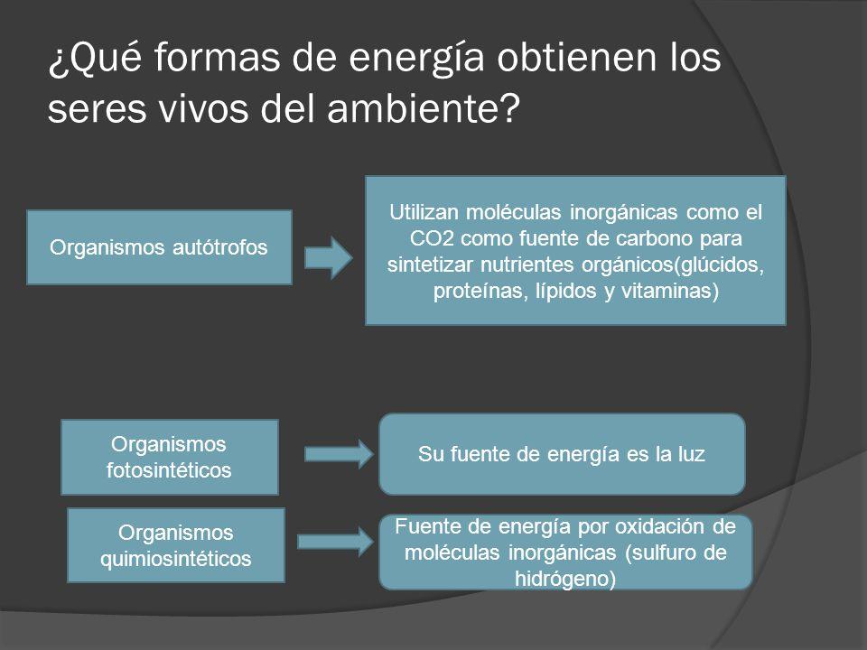 ¿Qué formas de energía obtienen los seres vivos del ambiente