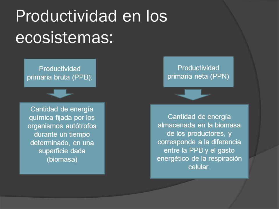 Productividad en los ecosistemas: