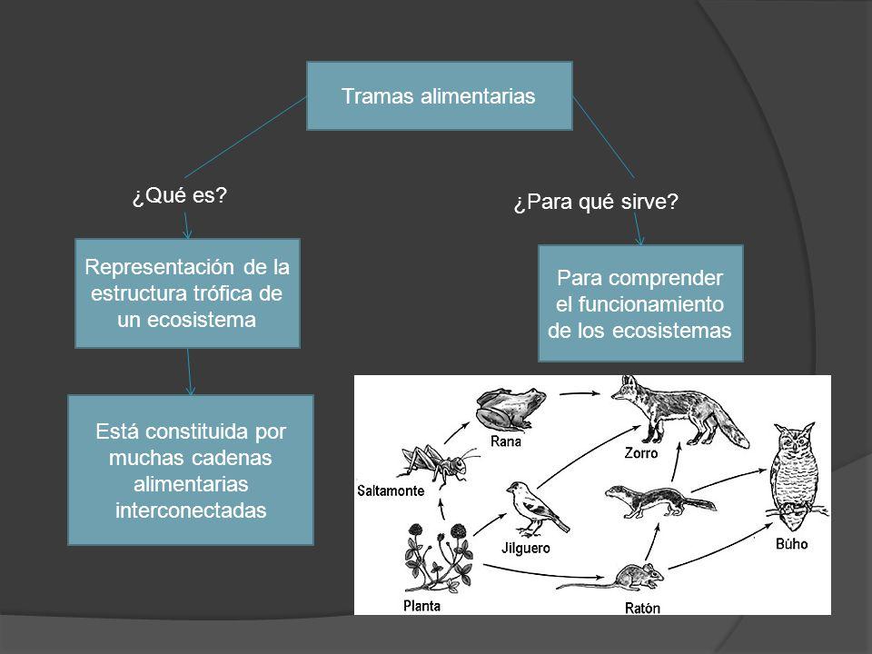 Representación de la estructura trófica de un ecosistema
