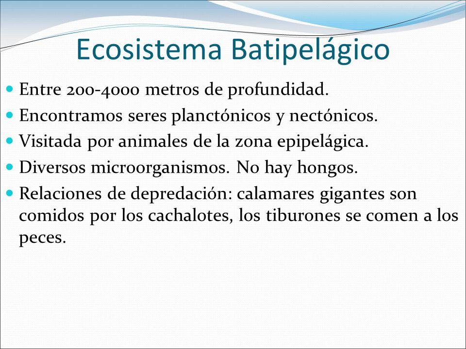 Ecosistema Batipelágico