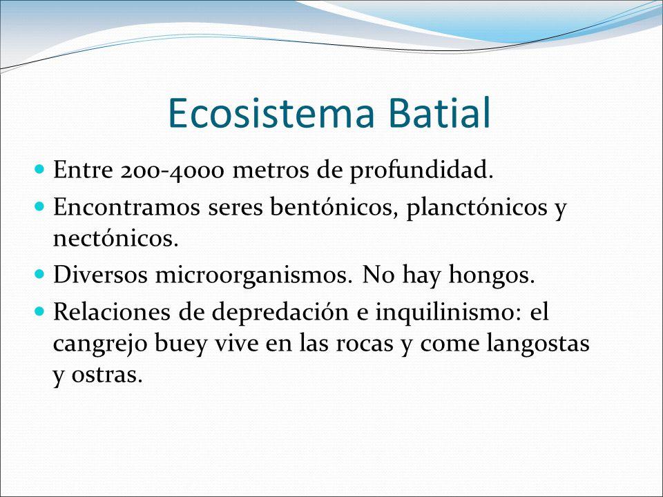 Ecosistema Batial Entre 200-4000 metros de profundidad.