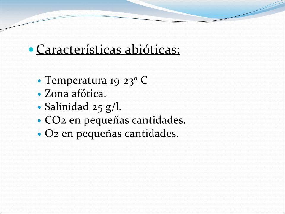 Características abióticas: