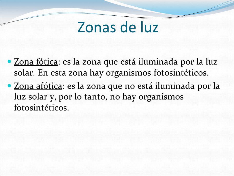 Zonas de luz Zona fótica: es la zona que está iluminada por la luz solar. En esta zona hay organismos fotosintéticos.