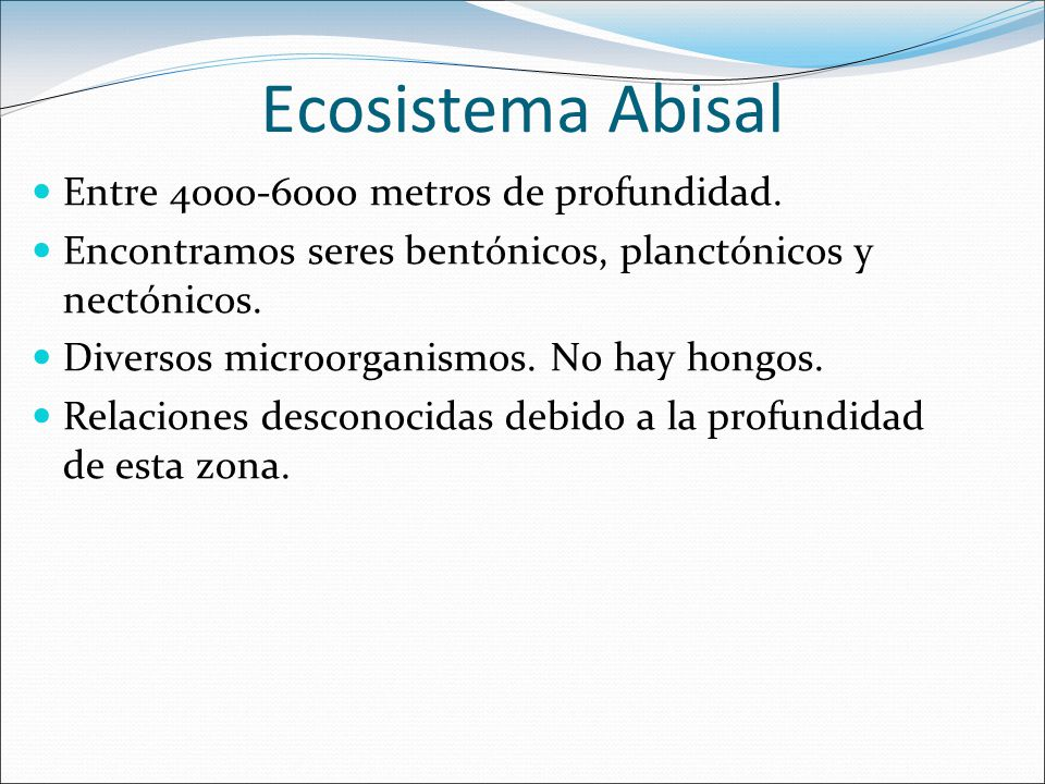 Ecosistema Abisal Entre 4000-6000 metros de profundidad.
