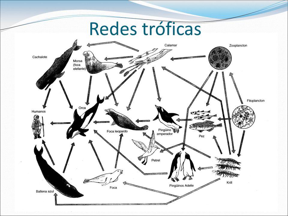 Redes tróficas