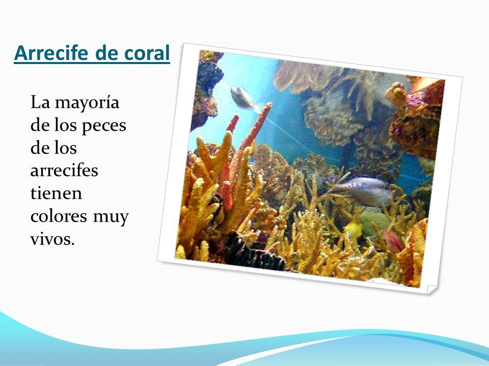 Arrecife de coral La mayoría de los peces de los arrecifes tienen colores muy vivos.