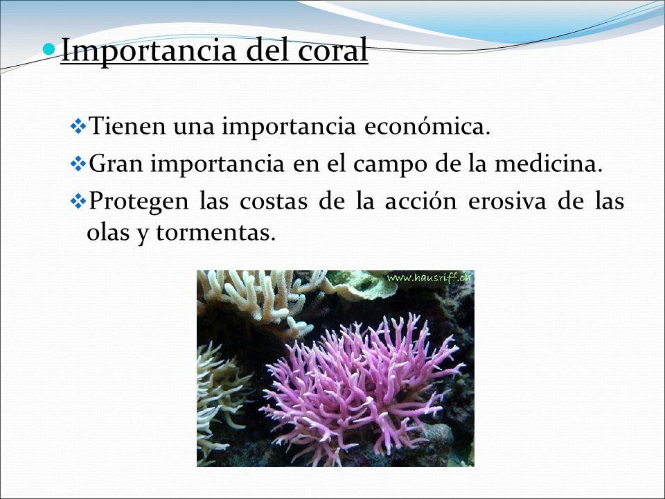 Importancia del coral Tienen una importancia económica.