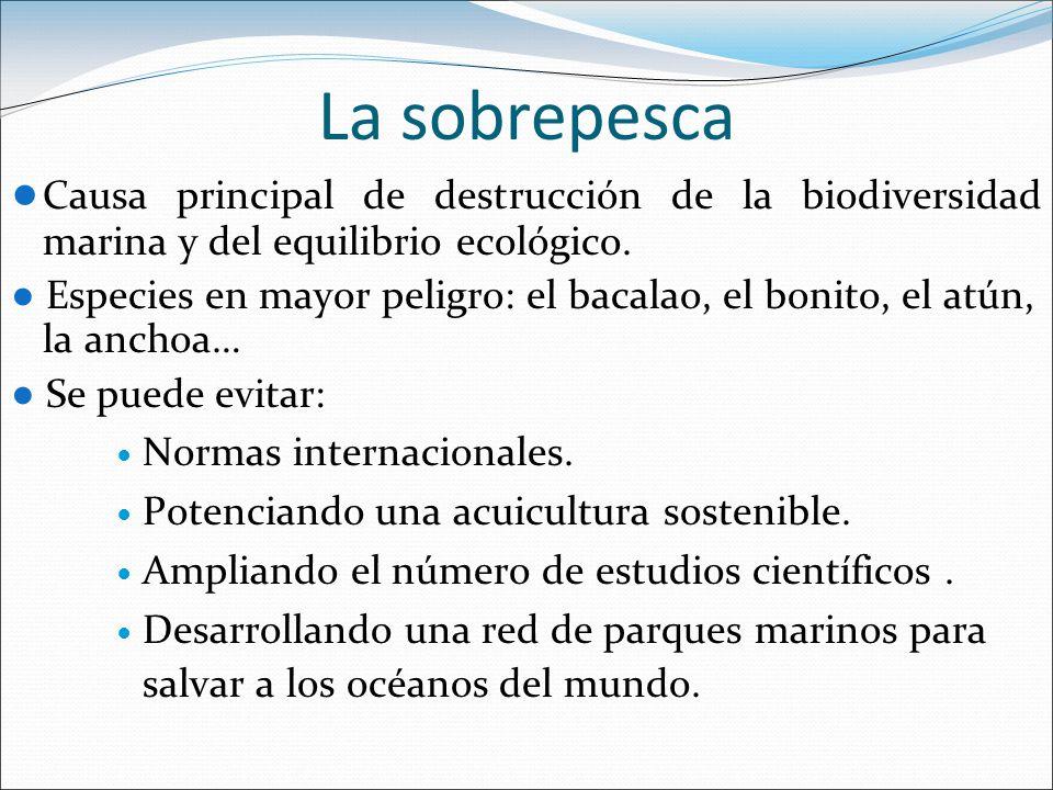 La sobrepesca ● Causa principal de destrucción de la biodiversidad marina y del equilibrio ecológico.