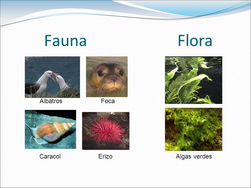 Fauna Flora Albatros Foca.
