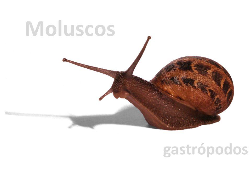 Moluscos gastrópodos